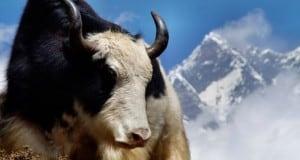 Trekking im Annapurna-Massiv in Nepal: Wie man Erfahrungen fürs Leben sammelt
