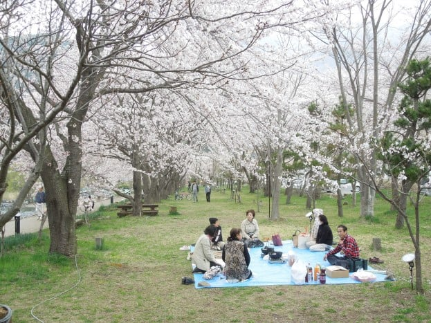 japan-hanami