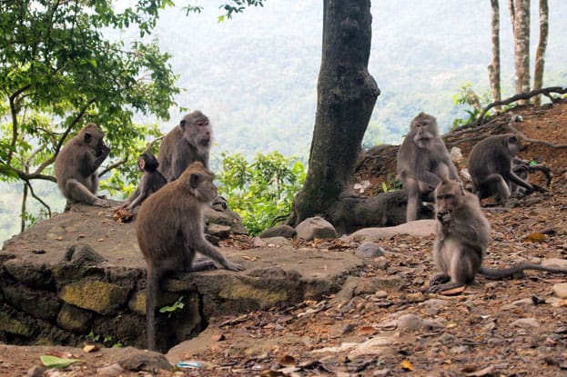Lombok - Pusuk Monkey Forest