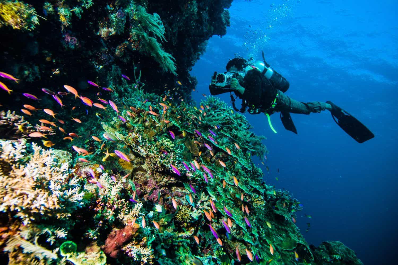 Lombok Reise-Tipps – am Korallenriff tauchen