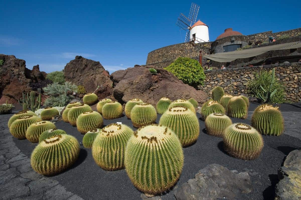 Spanien-Reise-Tipps – Kakteenfarm auf Lanzarote