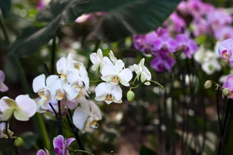 Kurzurlaub Nordsee Orchidee