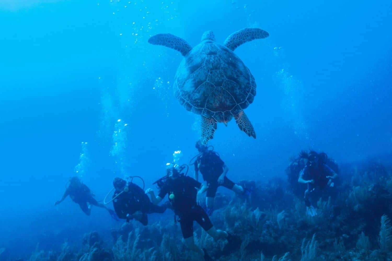 Yucatan Akumal Turtlebay