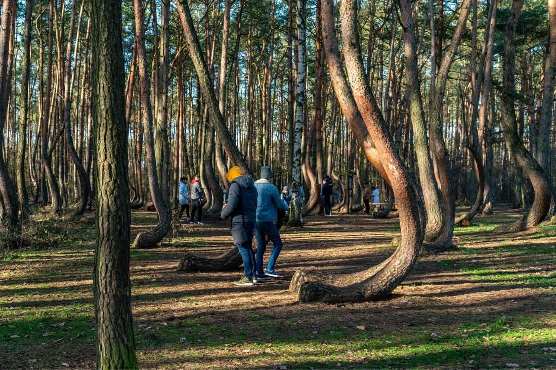 Polnische Ostsee Krzywy Las