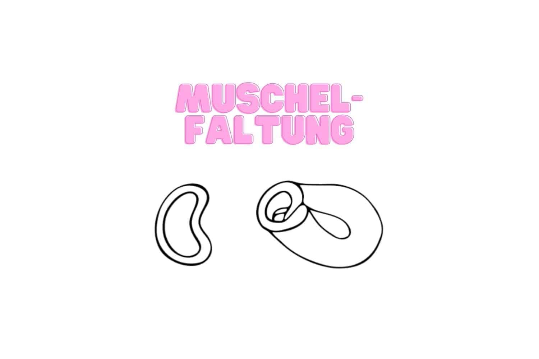 Menstruationstasse falten Muschel-Faltung