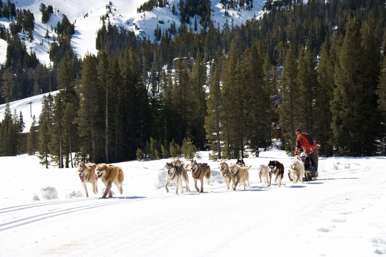 Nachhaltig Reisen Schlittenhunde im Schnee