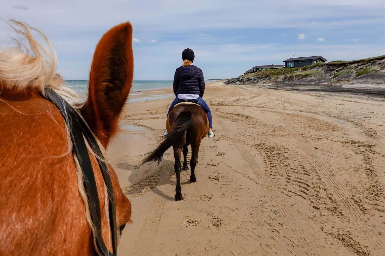 Pferdekutsche durchs Watt