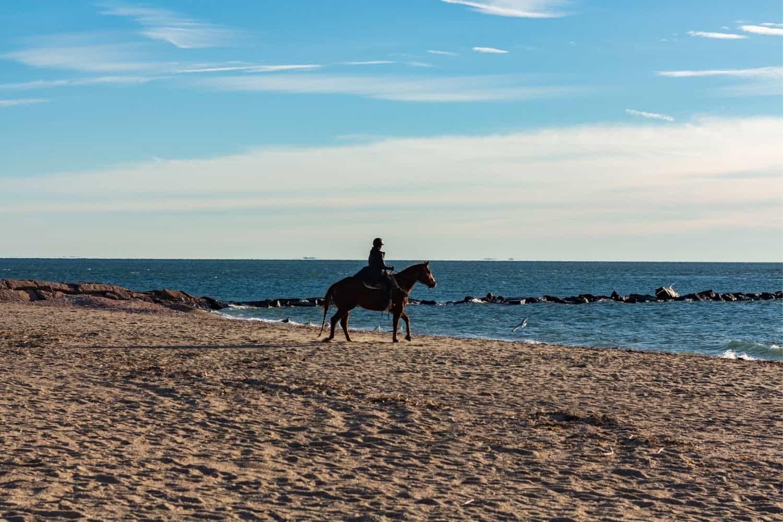 Pferden am Strand von Foehr