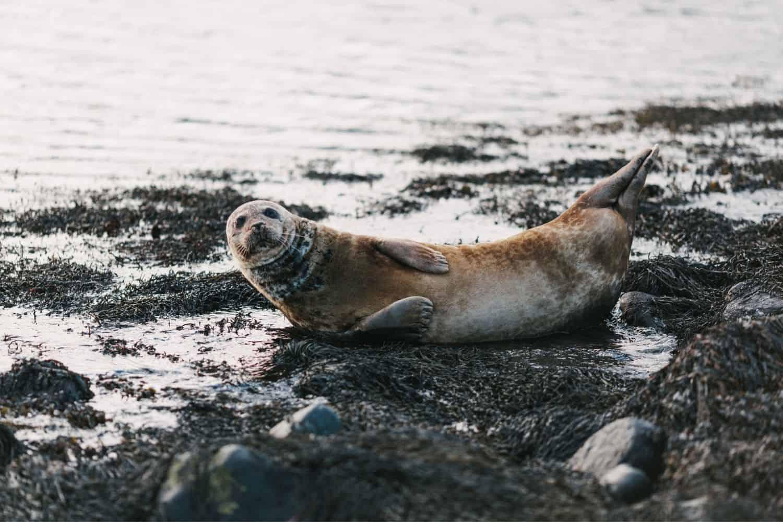 Seehundstation Norddeich mit Seehunden