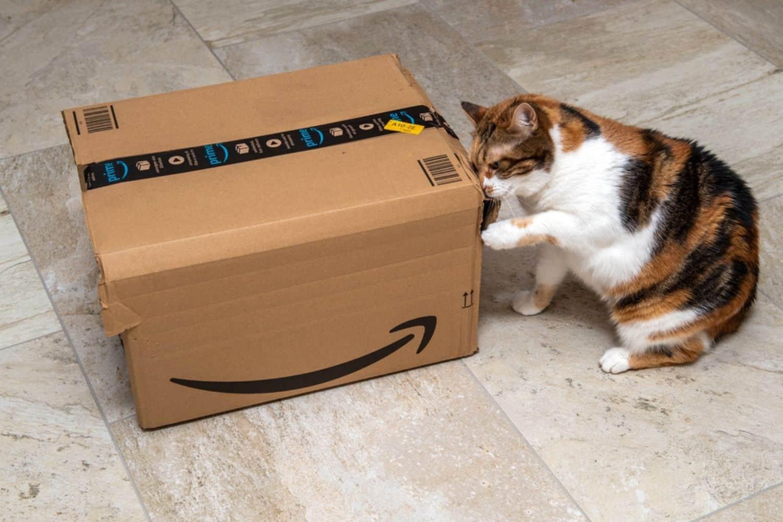 Amazon Prime Box Katze