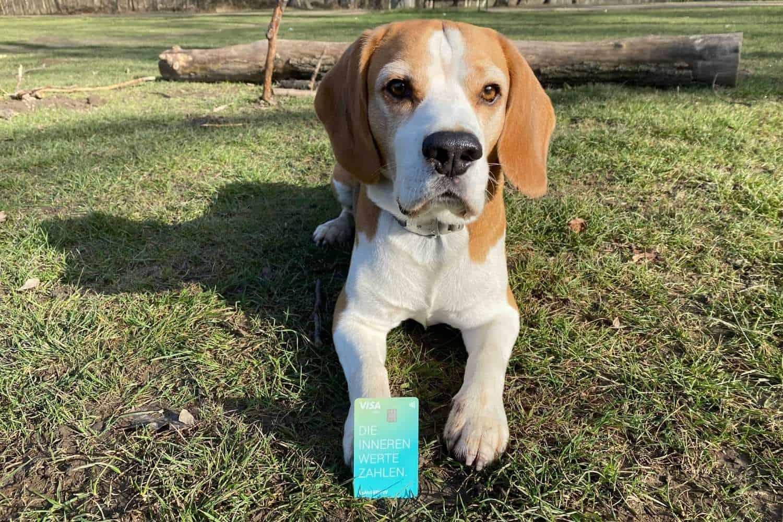 Kreditkarte Tomorrow Bank Beagle